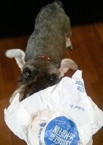 guilty pleasure - dogs birthday
